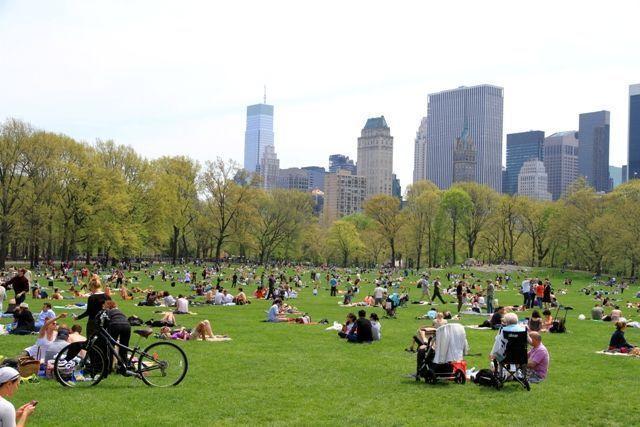 Que hacer en Nueva York -Picnic central park